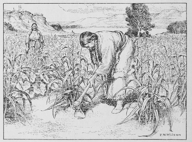 Hidatsa Women Cultivating Maize and Squashes with a Bone Hoe by Clark Wissler, 1917. Two women wearing dresses made of skins and long braids stand in a field of corn and squash. One hoes next to a corn stalk while the other looks on. Hills and trees are visible in the distance.